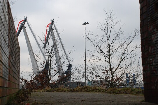 port cranes and several little trees in the port of Neustadt, Bremen/ Germany, seen through an uncommon visual axis