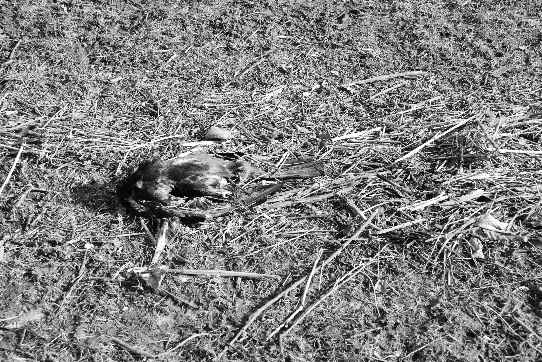 A dead bird among twigs and reeds which had been washed abank by the last flood